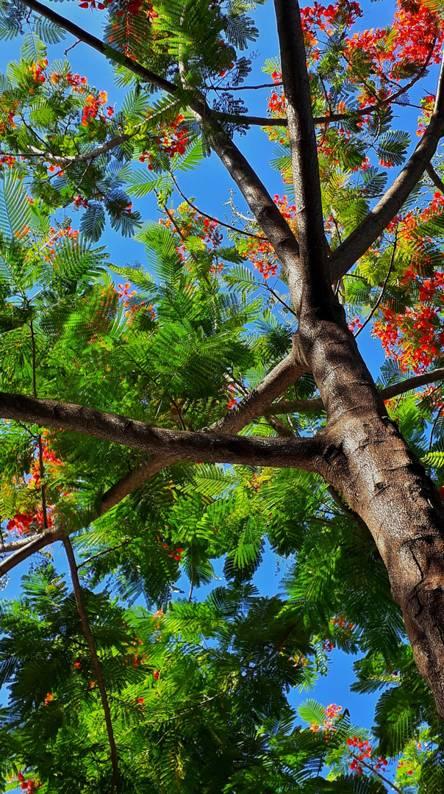تصویر پس زمینه طبیعت nature wallpaper برای موبایل + 180 عدد